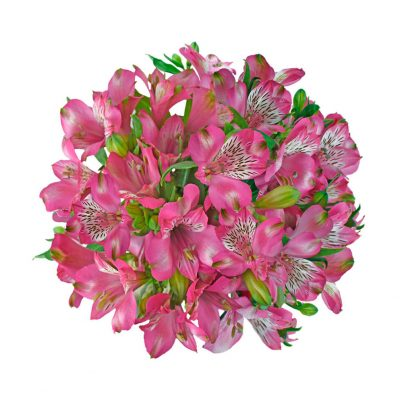 Arlekin alstroemeria summer flowers
