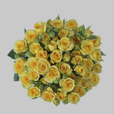 Babe yellow spray roses