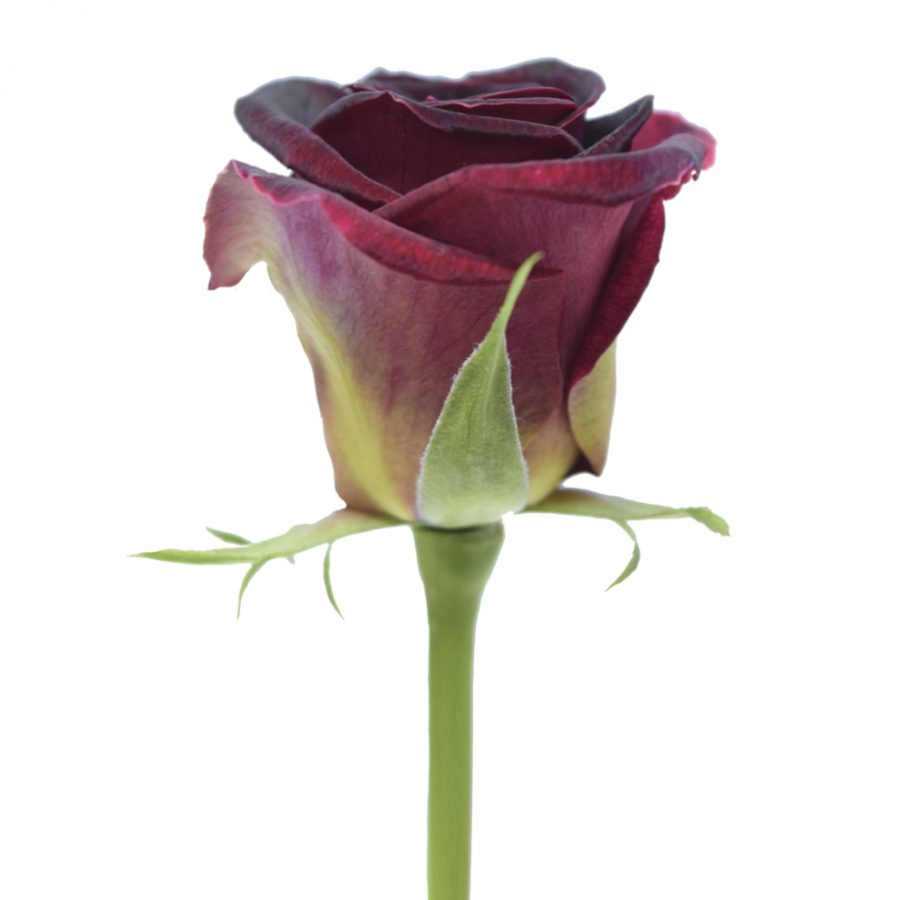 Black beauty red roses side