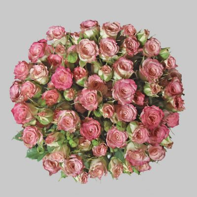 Blushing majolika pink spray roses