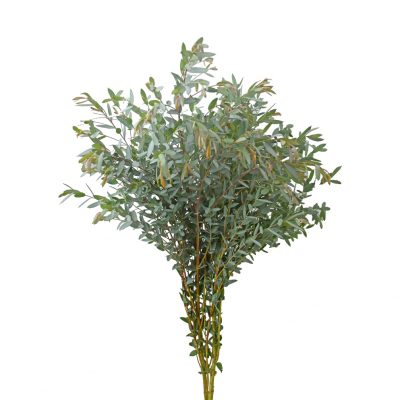 Eucalyptus nicholii greens