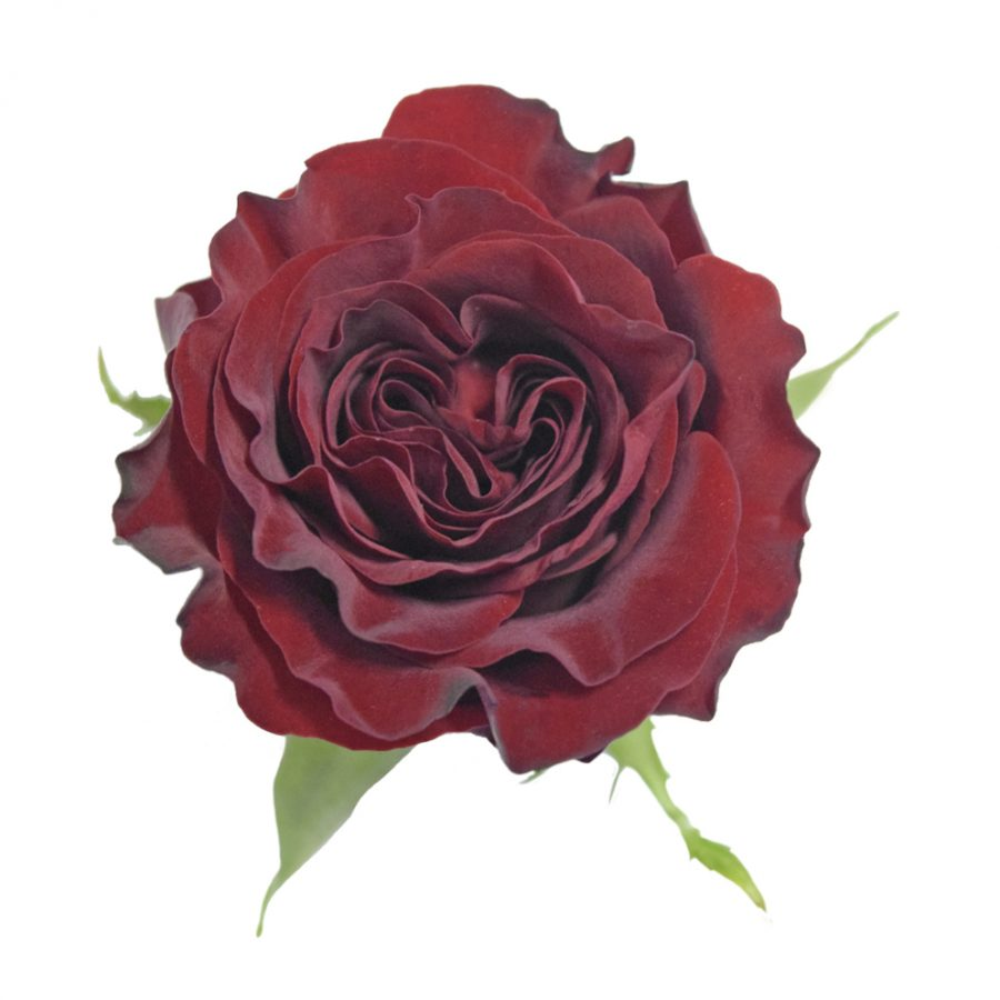 Heart red roses