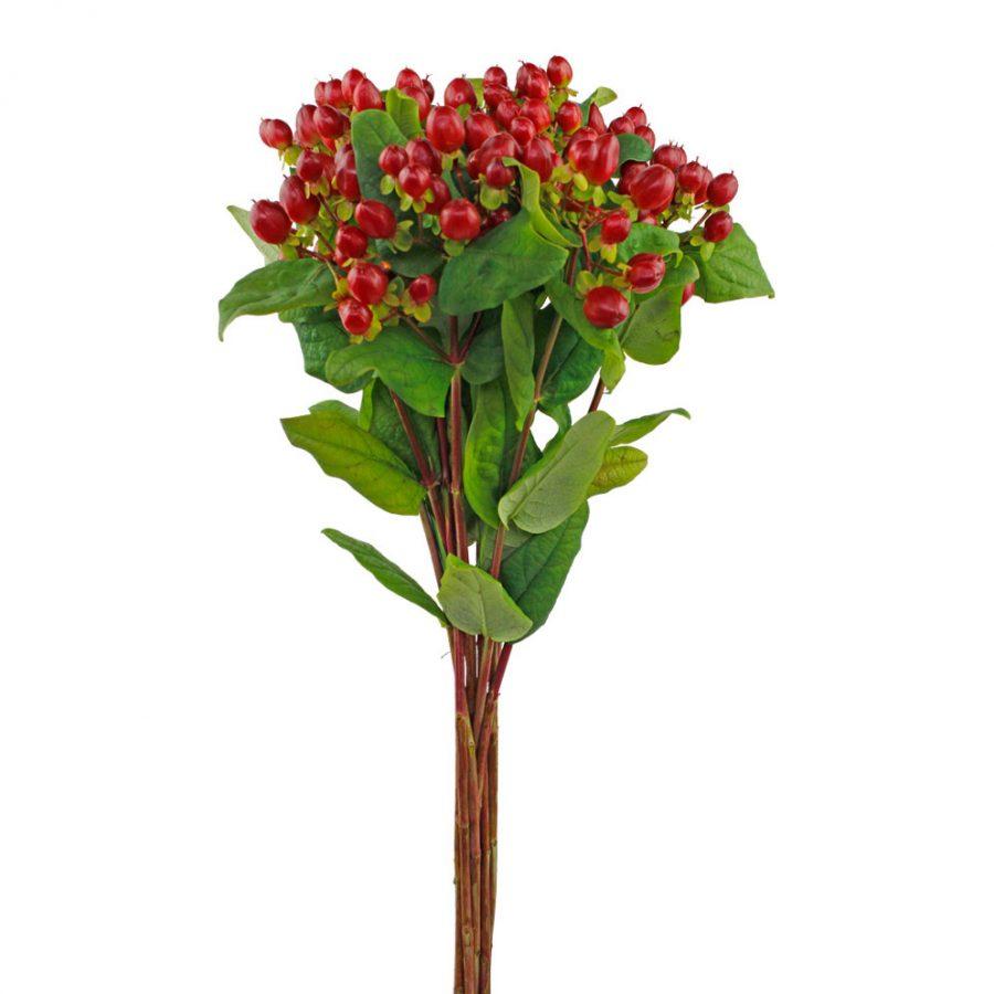 Hypericum red summer flowers
