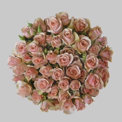 Ilse peach spray roses