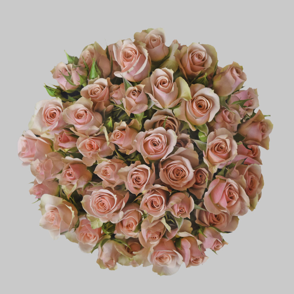 Ilse peach spray roses