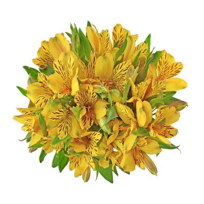 Jamaica alstroemeria summer flowers