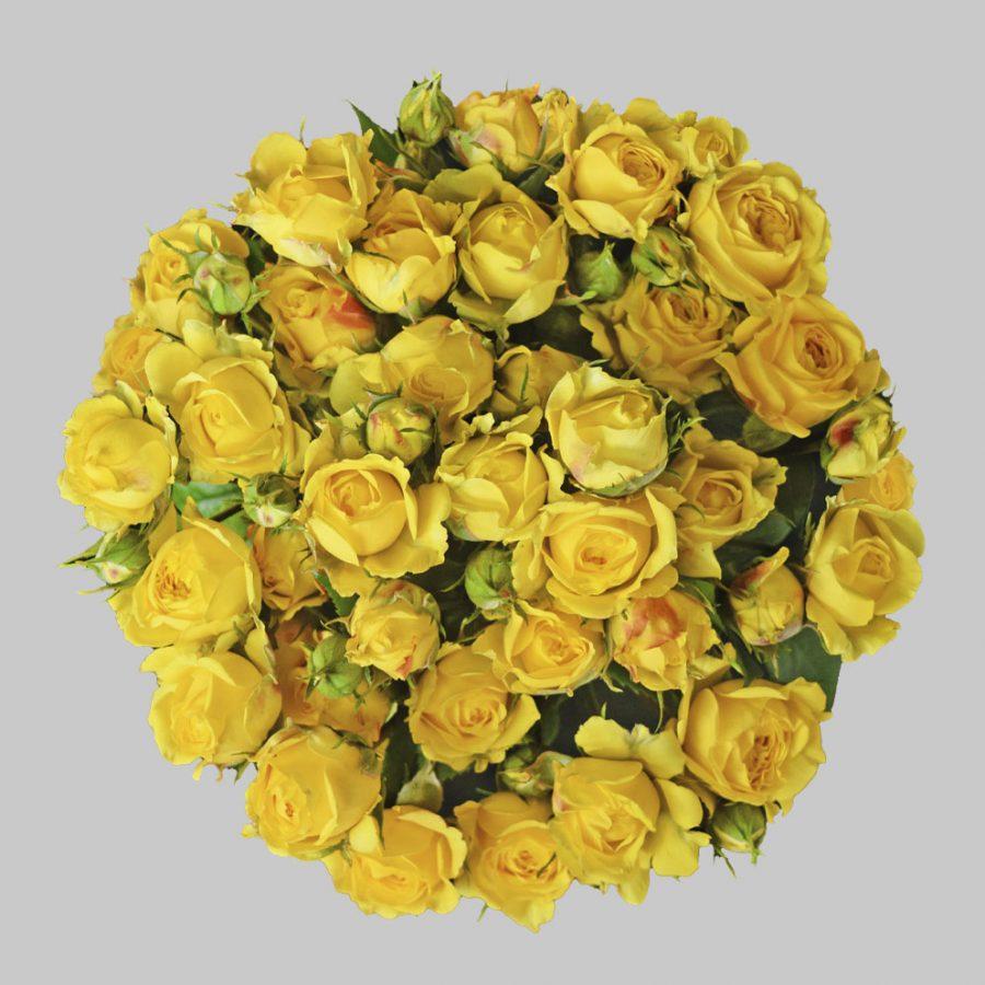 Jenny yellow spray roses