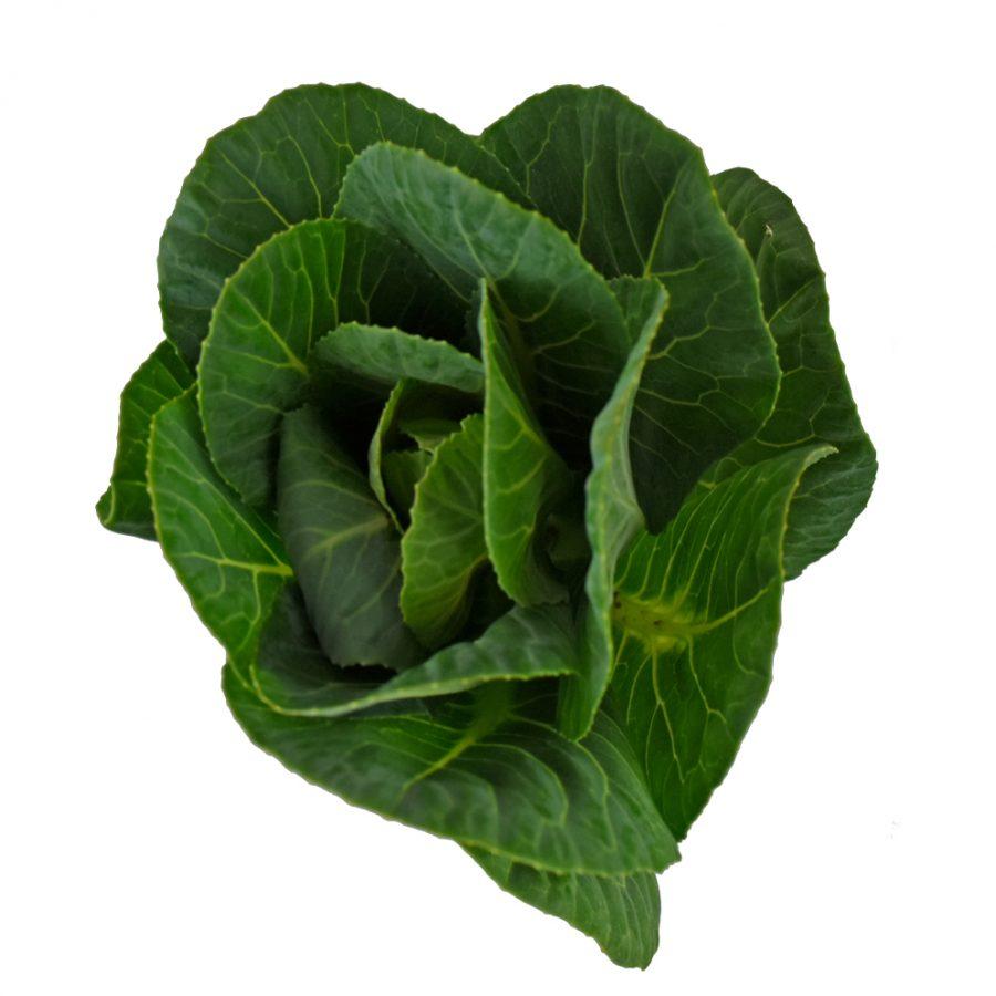 Kales green botanicals