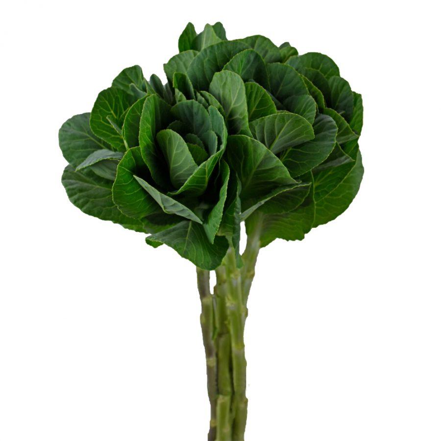 Kales green botanicals side