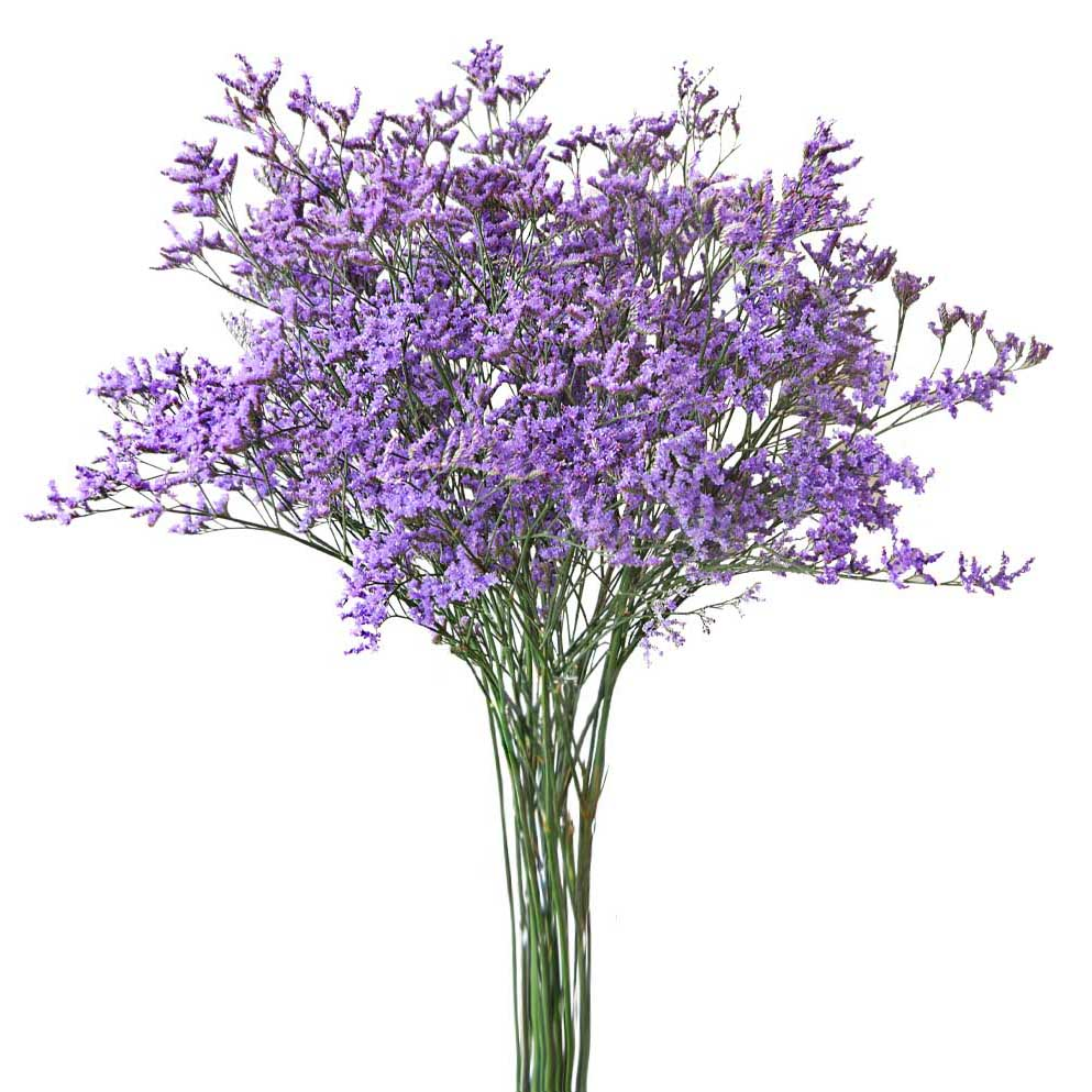 Limonium blue summer flowers