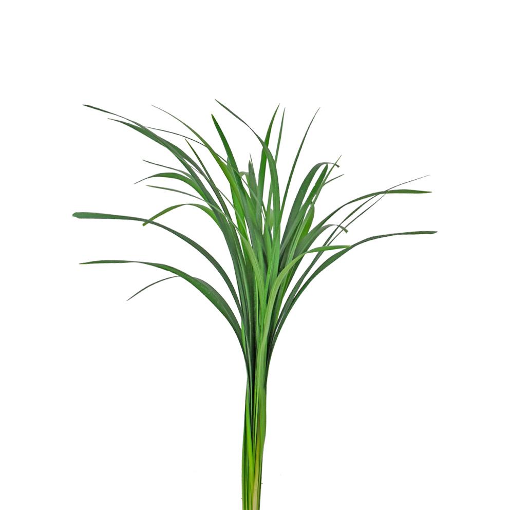 Liriope greens