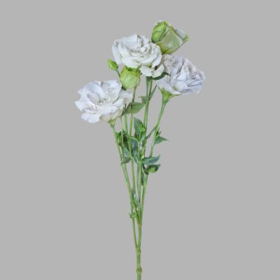 Lisianthus white summer-flowers