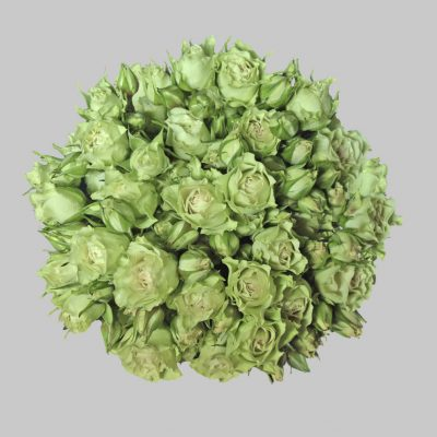 Luviana green spray roses