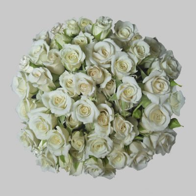 Majolika white spray roses