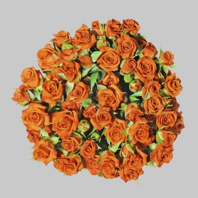 Neorange orange spray roses
