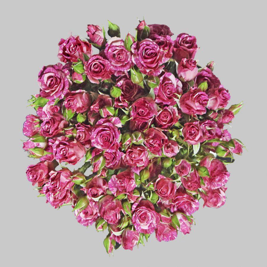 Pink flash hot pink spray roses