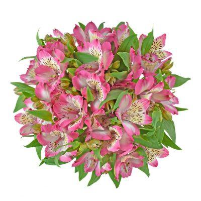 Pumori alstroemeria summer flowers