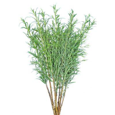 Rosemary greens
