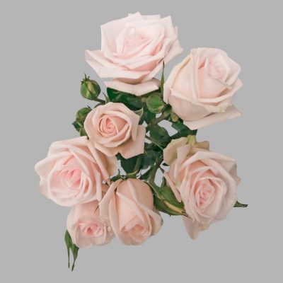 Royal porceline spray roses