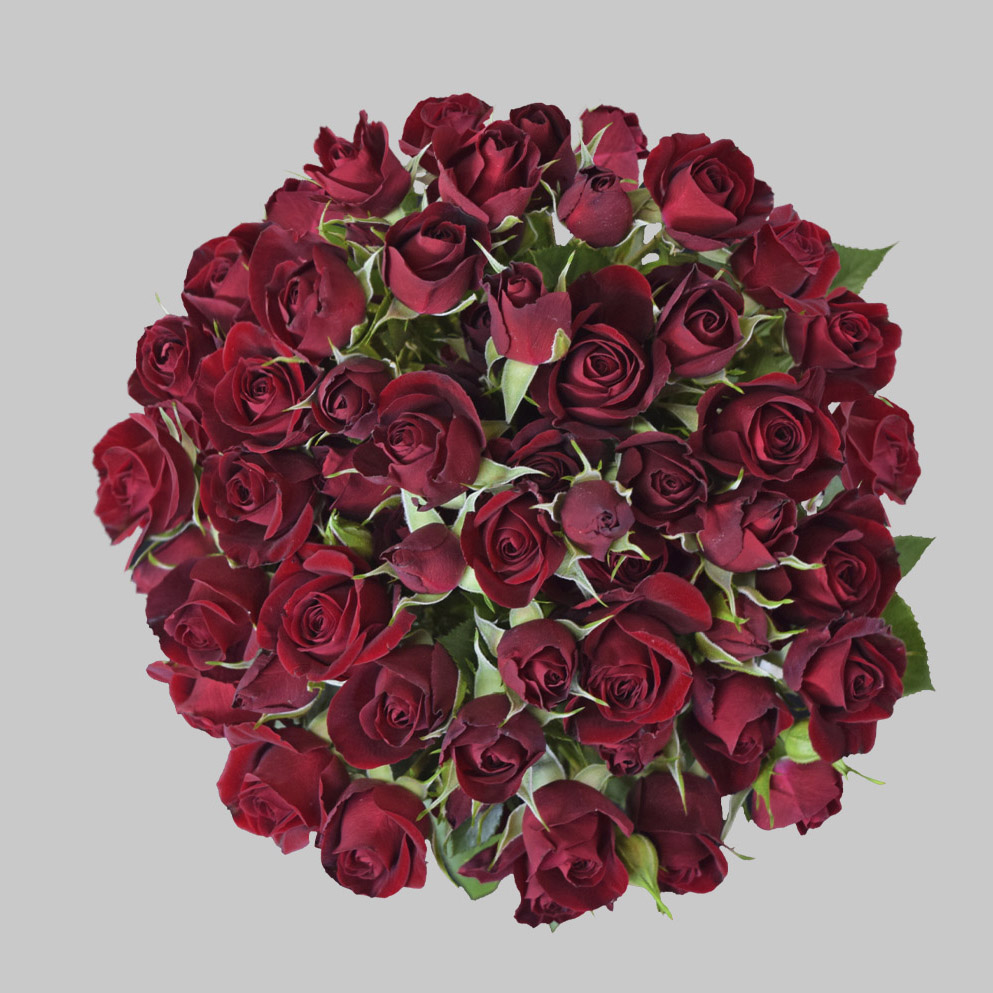 Rubyred red spray roses