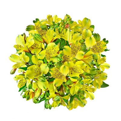 Shakira alstroemeria summer flowers