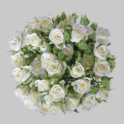 Snow flake white spray roses