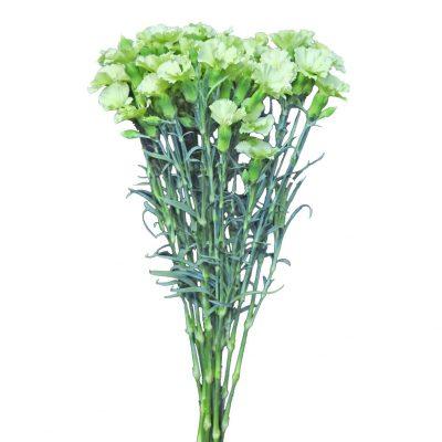 Solomio ligth green summer flowers
