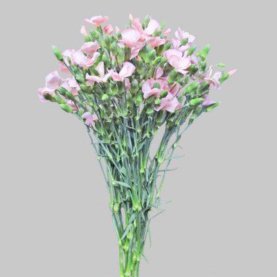 Solomio ligth pink summer flowers