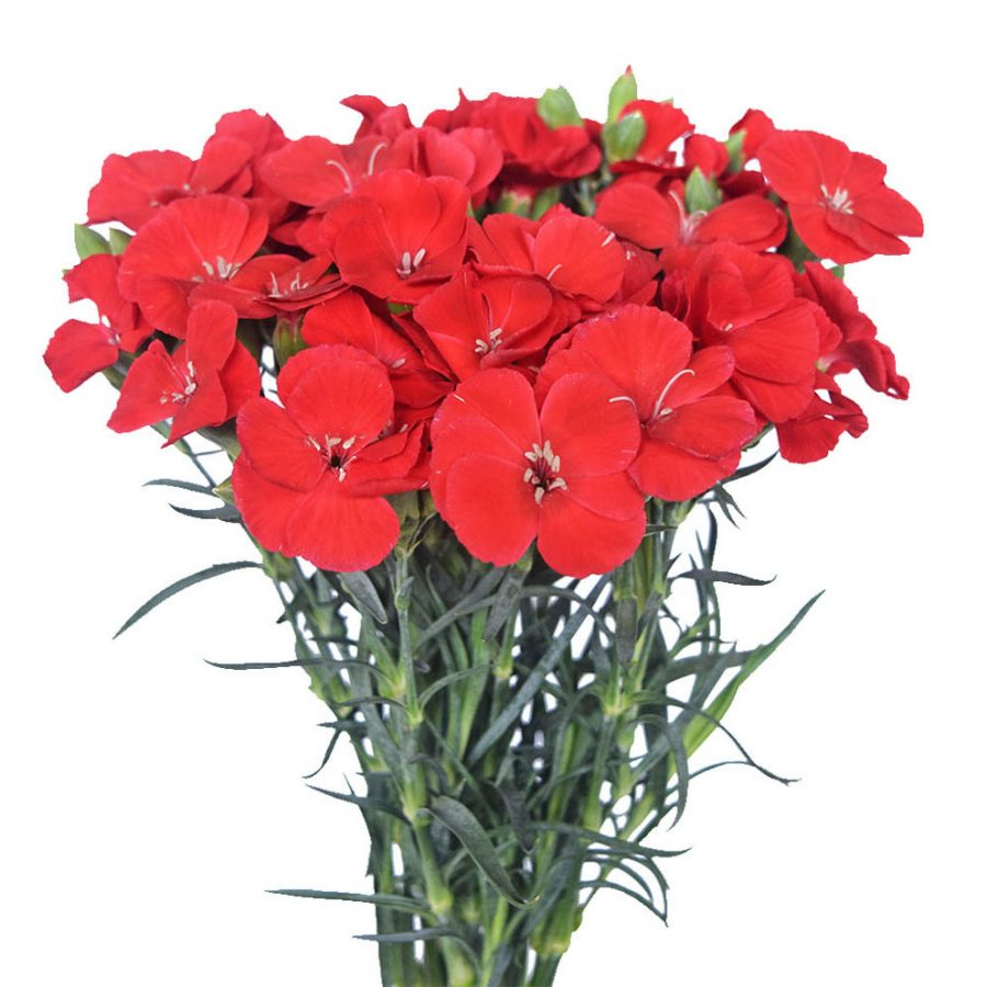 Solomio red summer flowers side