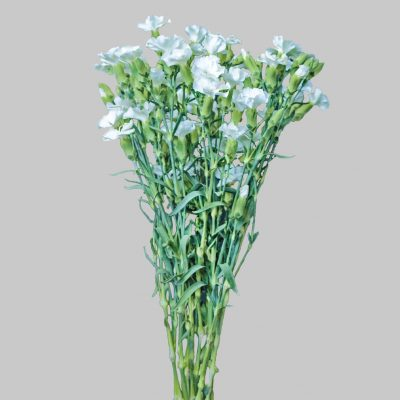 Solomio white round edges summer flowers