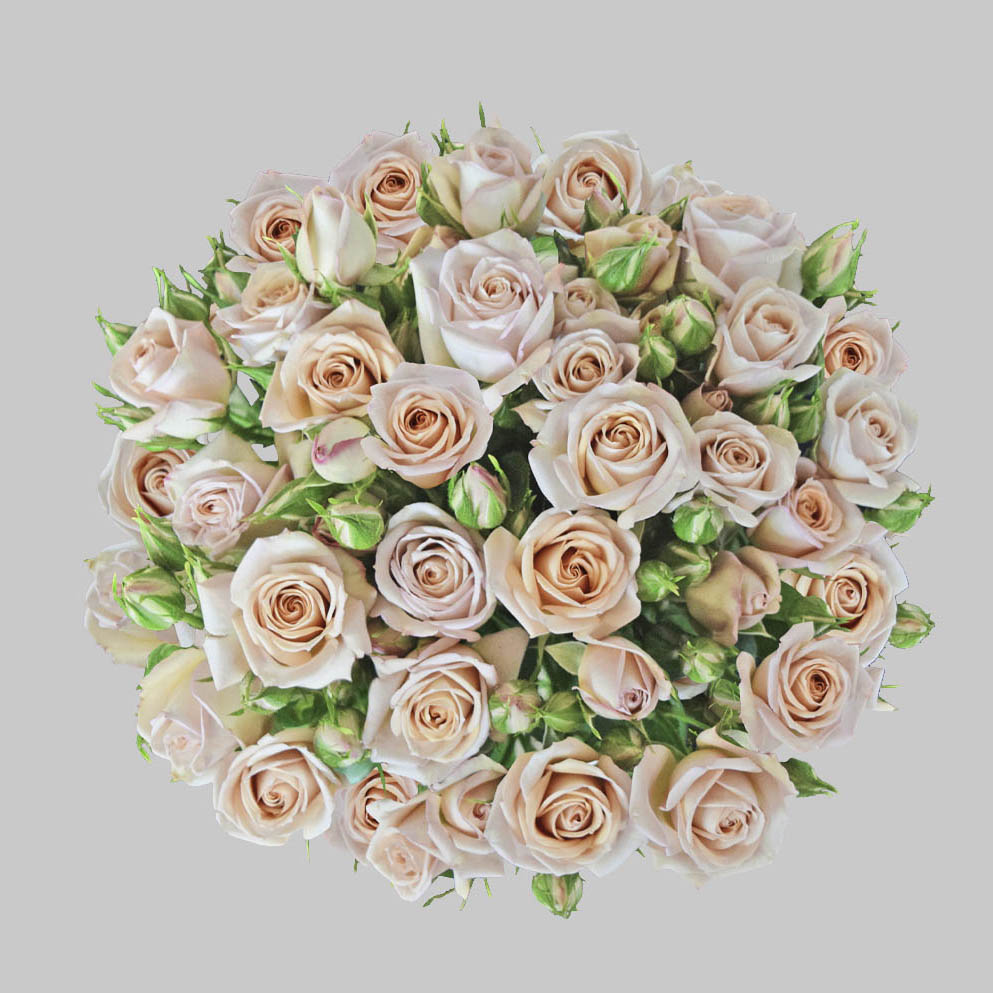 Spray sahara peach spray roses
