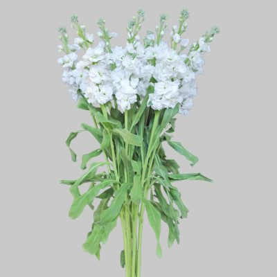 Stock white summer flowers