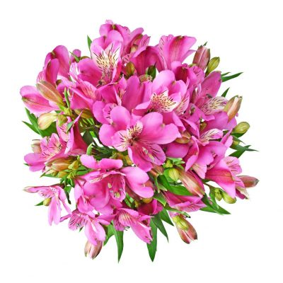 Stratus alstroemeria summer flowers