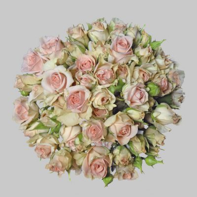 Sweet sahara pink spray roses