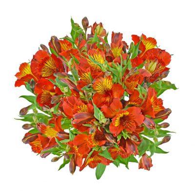 Tampa alstroemeria summer flowers