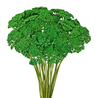 Tinted achillea green