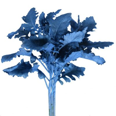 Tinted dusty miller blue metalized