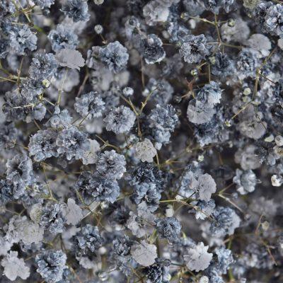 Tinted gypsophila saltn epper close up