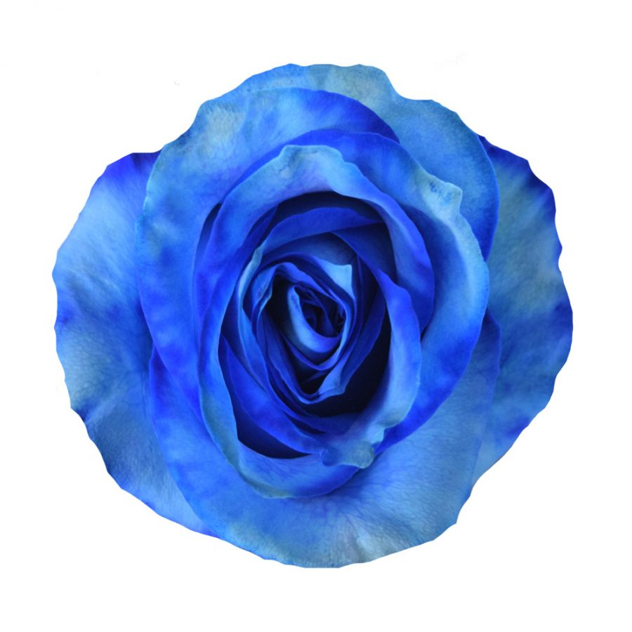 Tinted roses blue