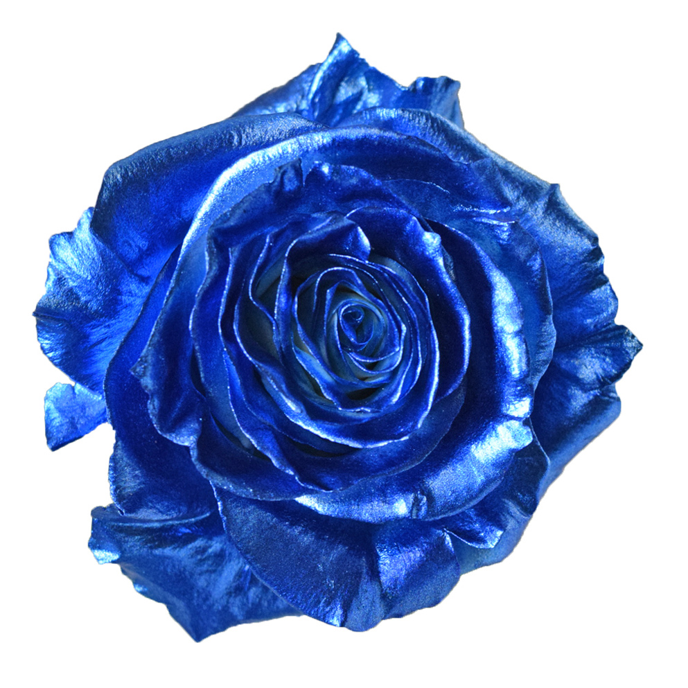 Tinted roses metalic blue
