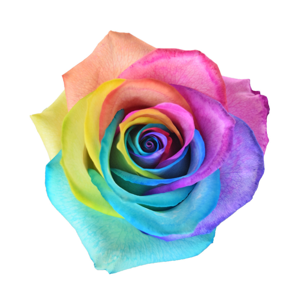 Tinted roses rainbow classic