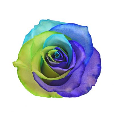 Tinted roses rainbow variants 1