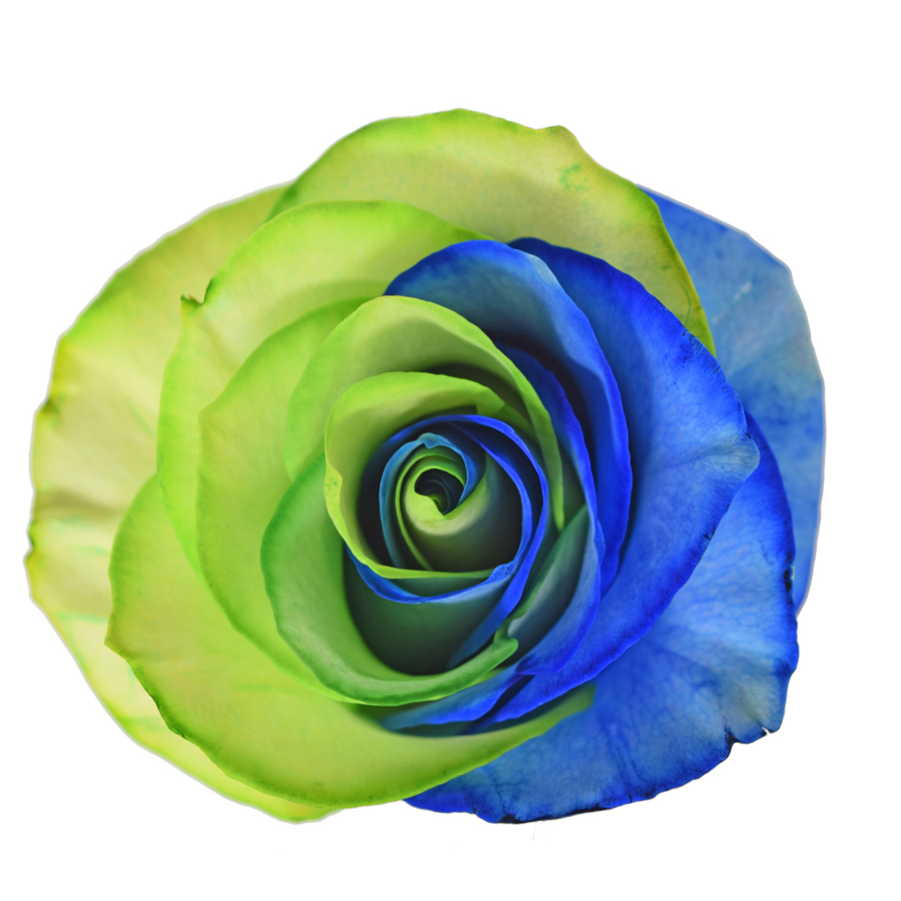 Tinted roses rainbow variants 2