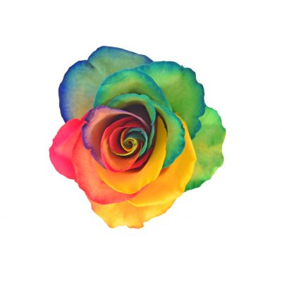 Tinted roses rainbow variants 3