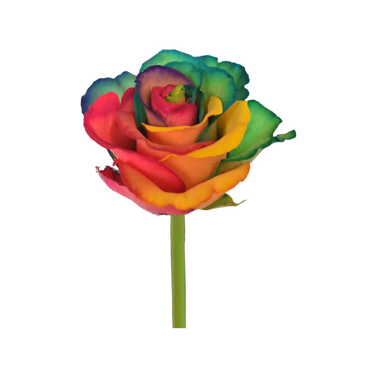 Tinted roses rainbow variants 3 side