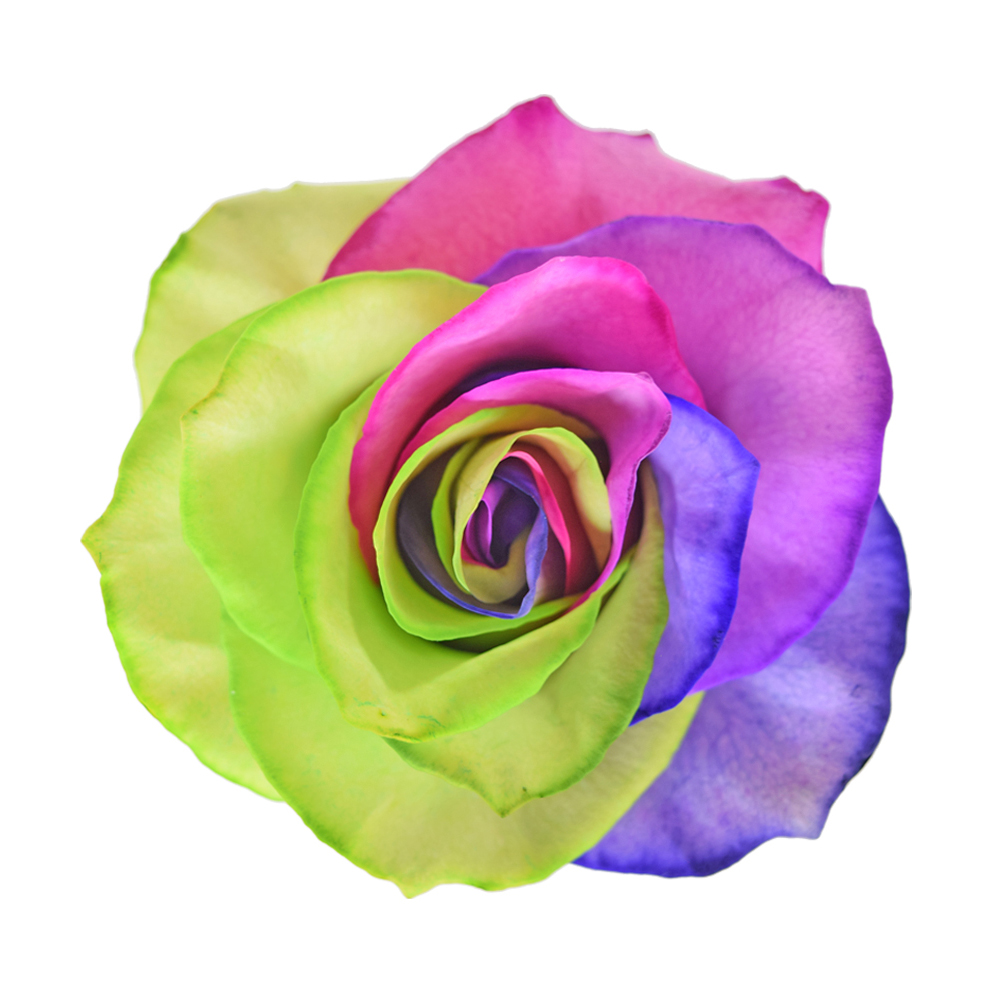 Tinted roses rainbow variants 4