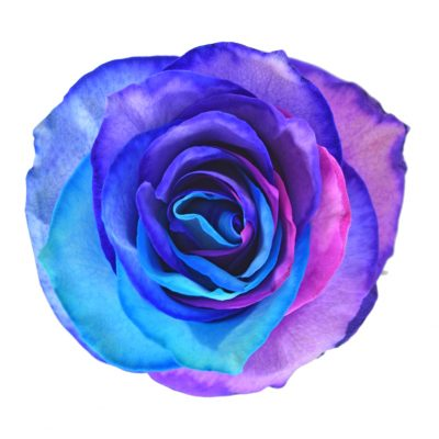 Tinted roses rainbow variants 5