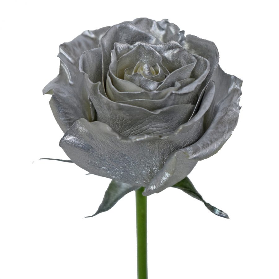 Tinted roses silver side