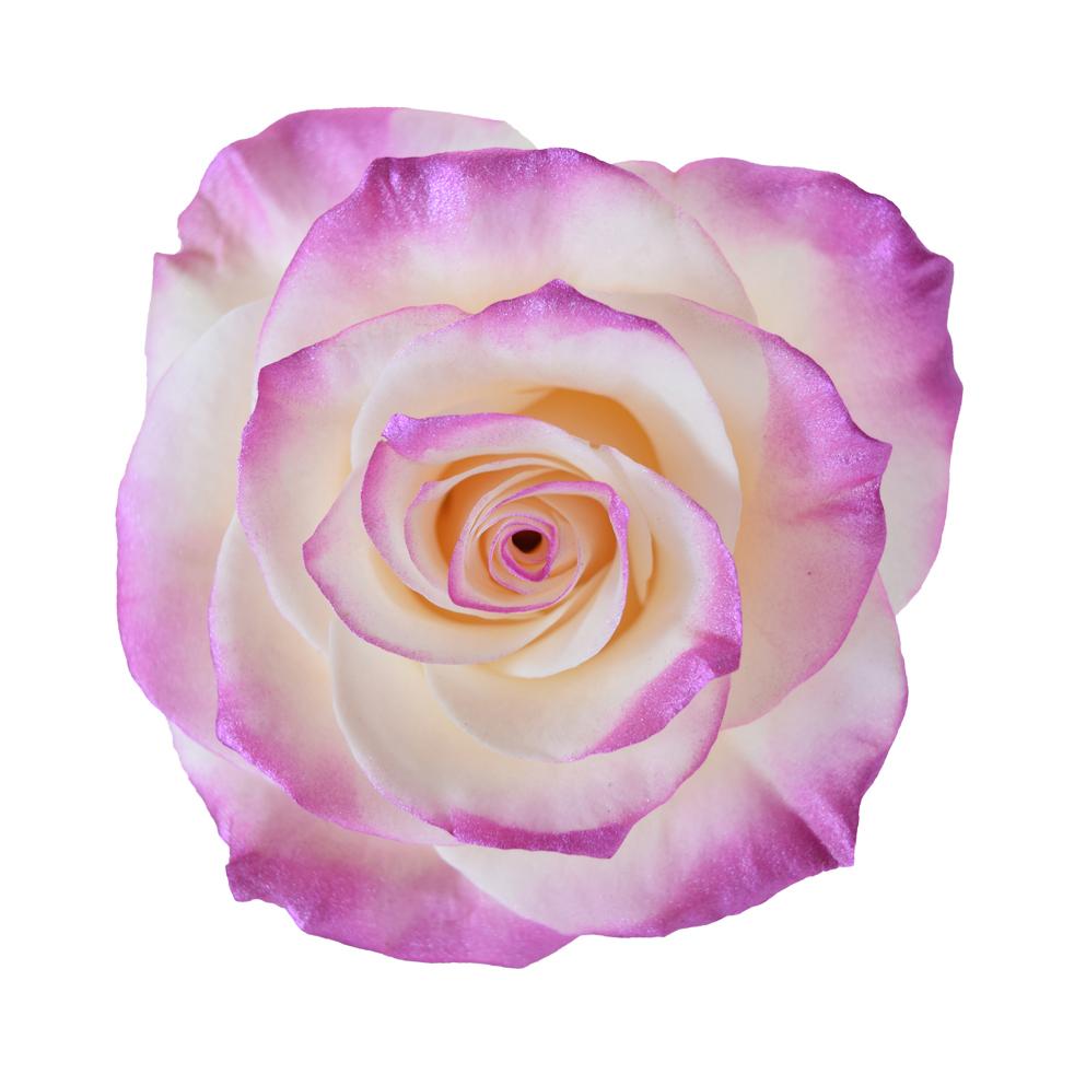 Tinted roses spraying variants 10