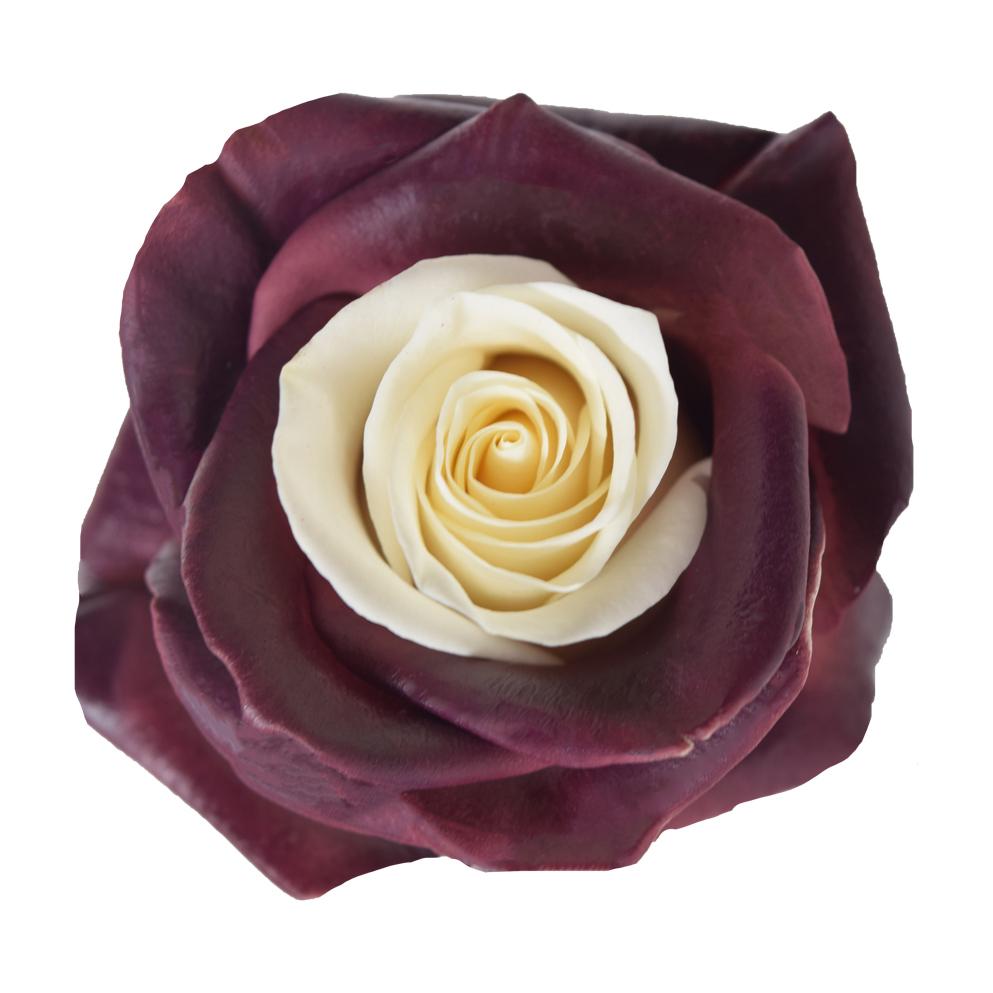 Tinted roses spraying variants 11